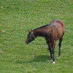競走馬の産地探訪の旅、二重間道路桜並木