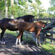 水飲み場の馬たち